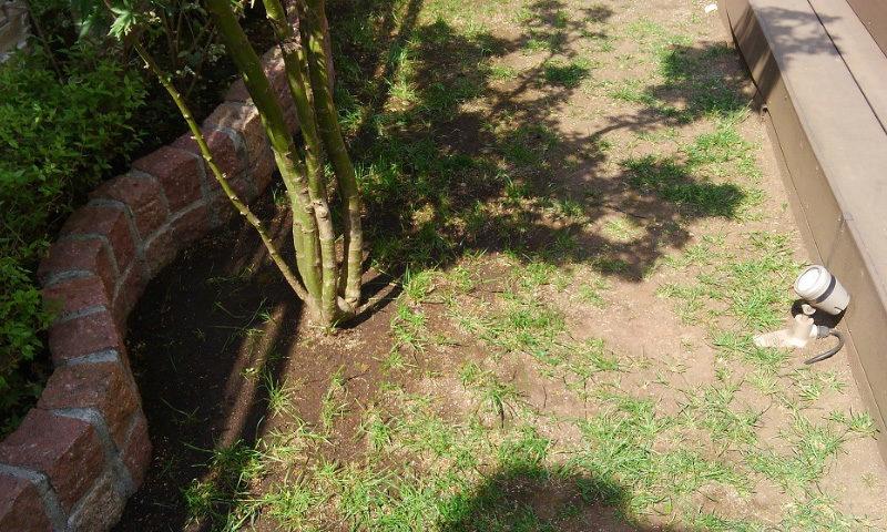 東京都 F様邸の庭・施工前の写真