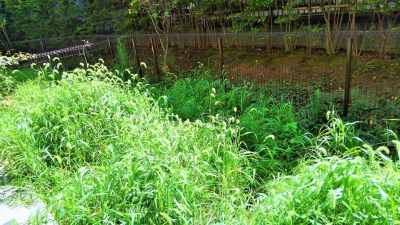 埼玉県 S様邸の庭施工前の写真1