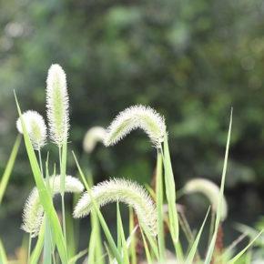 雑草対策の基本的なポイントのアイキャッチ画像